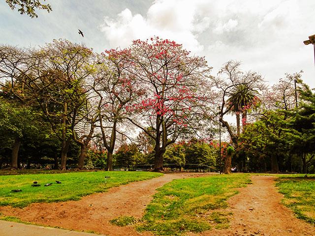 Palomas y árboles del parque Las Heras