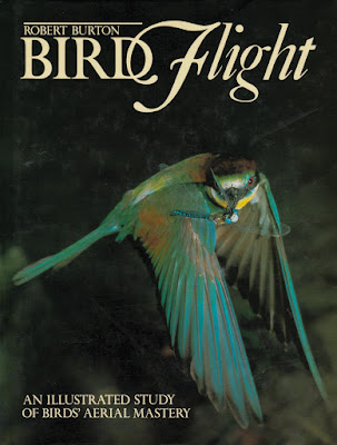 Bird Flight - An Illustrated Study Of Birds' Aerial Mastery