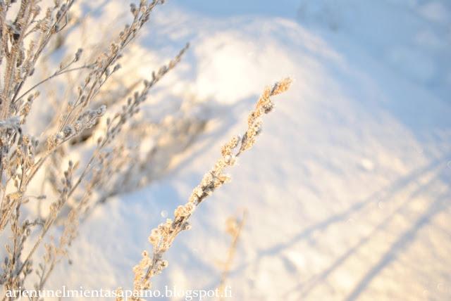 valokuvaus, ulkoilma, luontokuvaus, makro, järjestelmäkamera, Nikon D3000