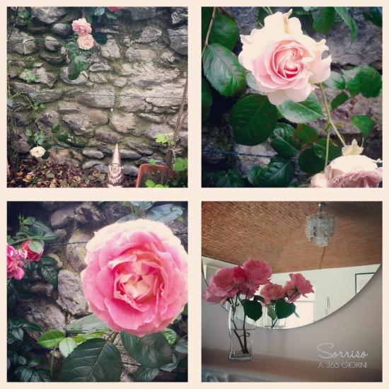 sorrisoa365giorni-antologia-rosae