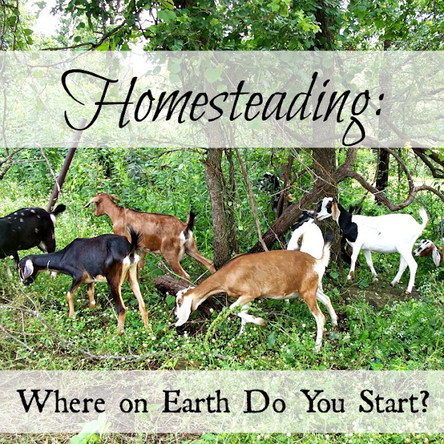 Homesteading: Where on Earth Do You Start?