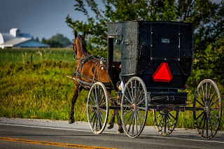 A rear left quarter view of an Amish covered buggy, drawn by a single horse.