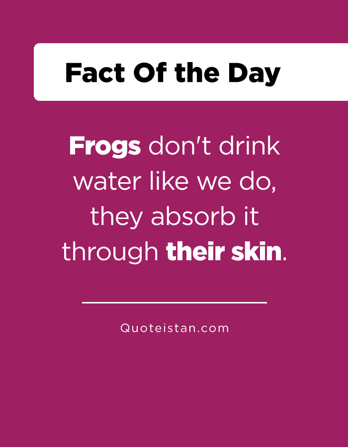 Frogs don't drink water like we do, they absorb it through their skin.