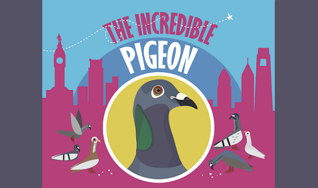 The Incredible Pigeon