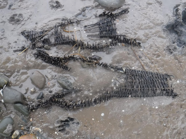 Fishermen in Wales find medieval fishing baskets