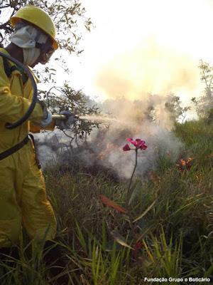 Dia do Cerrado, 11 de setembro, cerrado, bioma, savana, incêndios florestais, fogo, incêndios, desmatamento, fogo no cerrado, queimadas, extinção, unidades de conservação, fundação boticário, natureza