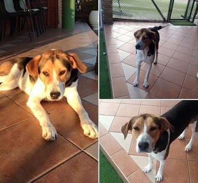 Ηγουμενίτσα: Ηλικιωμένος χτυπούσε με μαδέρι αδέσποτο σκύλο