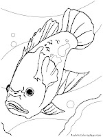 Oscar Aquarium Fish Kids Coloring Pages