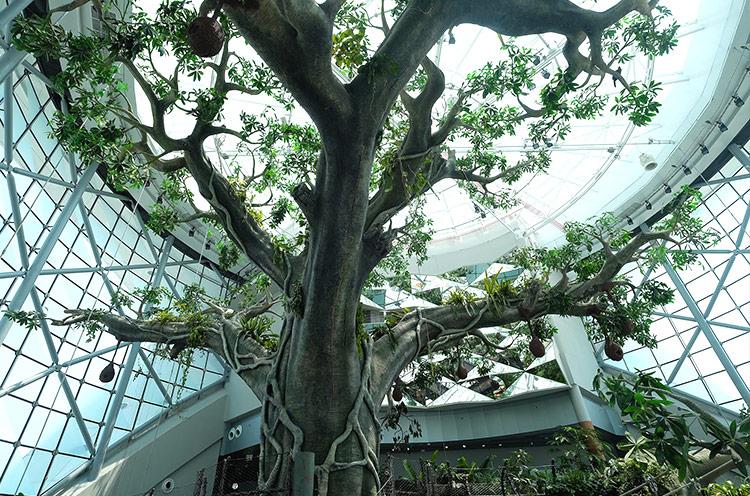 Visit Dubai city for Green Planet forest