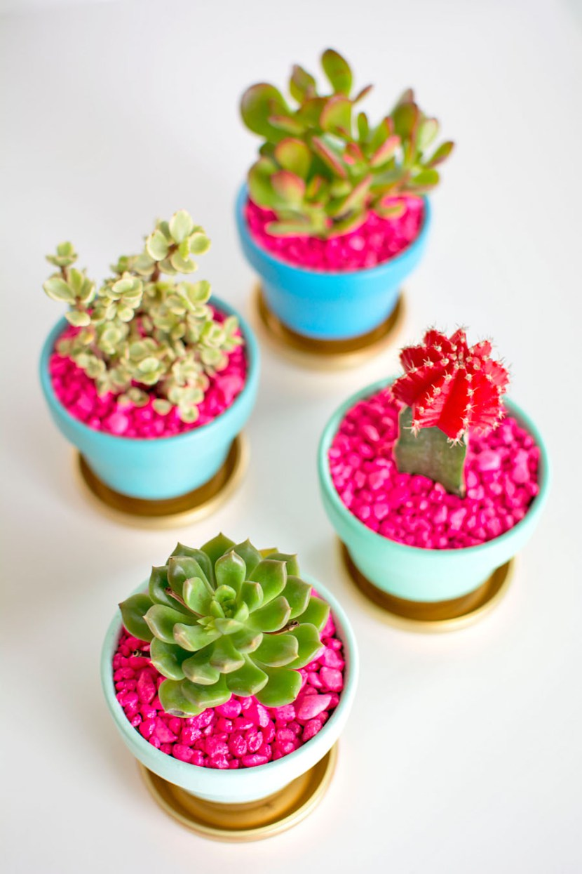 14 Ways to Display Succulents - Hot Pink Pebbles