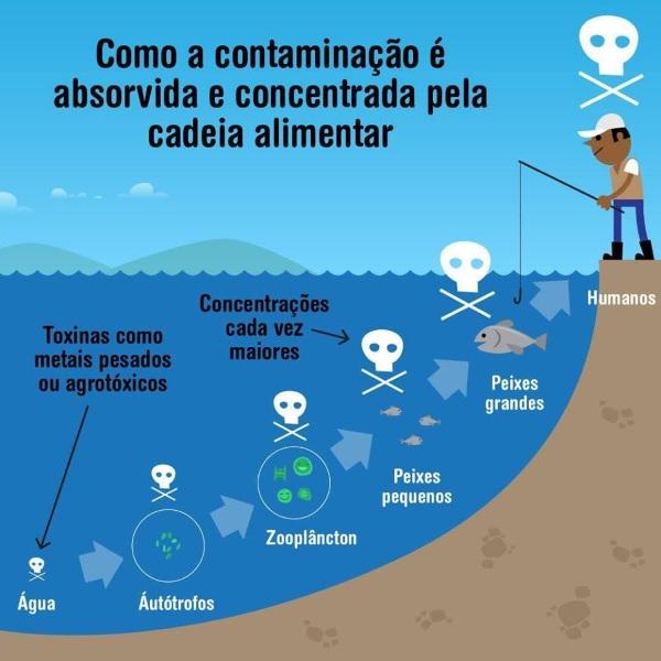 http://www.oblogdomestre.com.br/2018/01/Bioacumulacao.Bioconcentracao.Biomagnificacao.CienciaESaude.Quimica.html