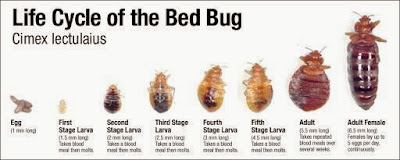 Bed Bugs London - Bed Bug Control UK - Blog - Advice - Removal