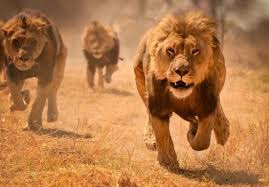 METRO: Union Warns Nigerians To Beware Of Escaped Lions