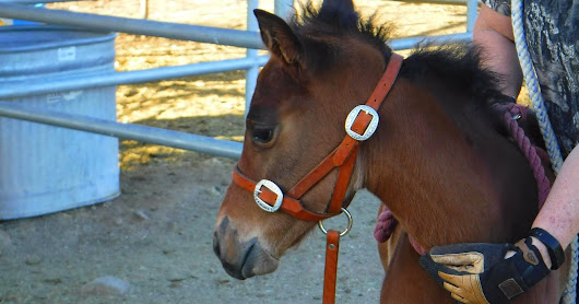 Stress-Free Halter-Breaking, Lesson One