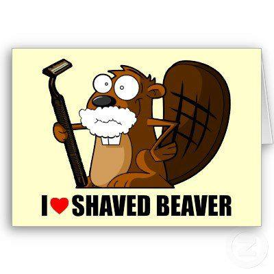 Something shaved beaver eating excellent