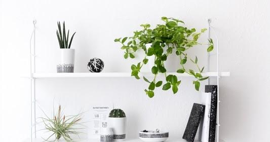 Urban jungle im home office pflanzen deko am schreibtisch for Schreibtisch deko
