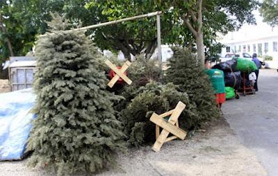 Recicla pinos navideños