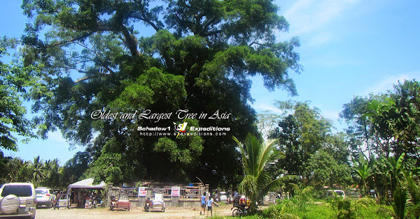 Asia's Largest Oldest Balete Tree - Schadow1 Expeditions