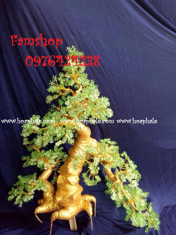 Goc bonsai cay hoa mai tai Truong Cong Giai
