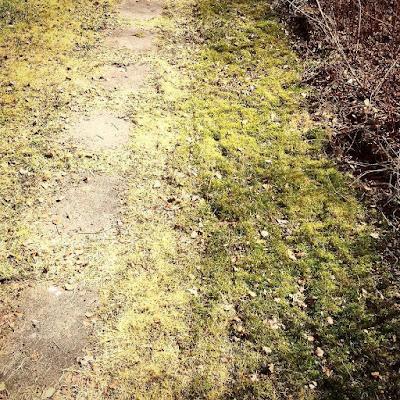 kivetty polku ja sammaleinen nurmikko