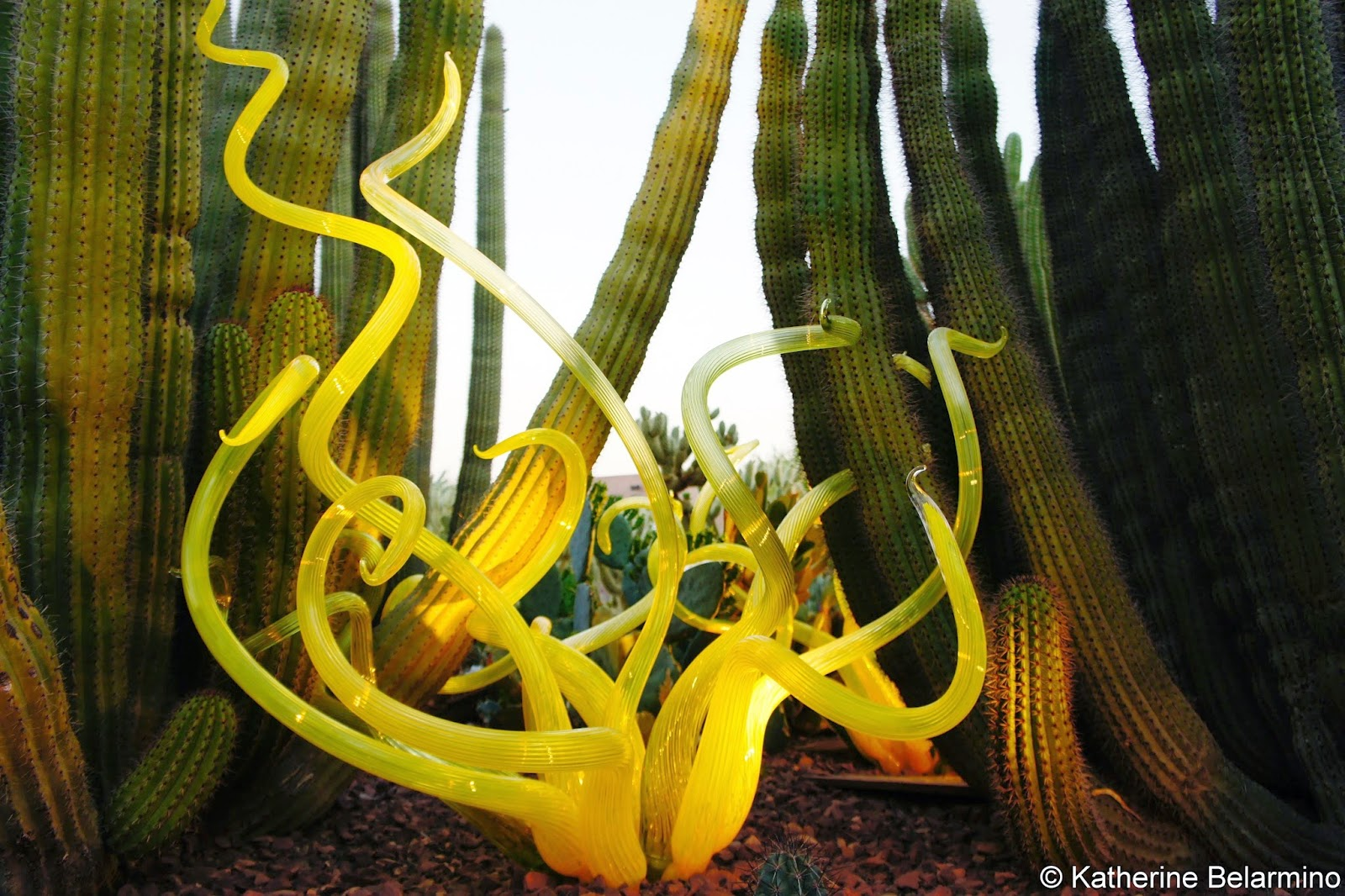Dale Chihuly Yellow Glass Desert Botanical Garden Phoenix Arizona