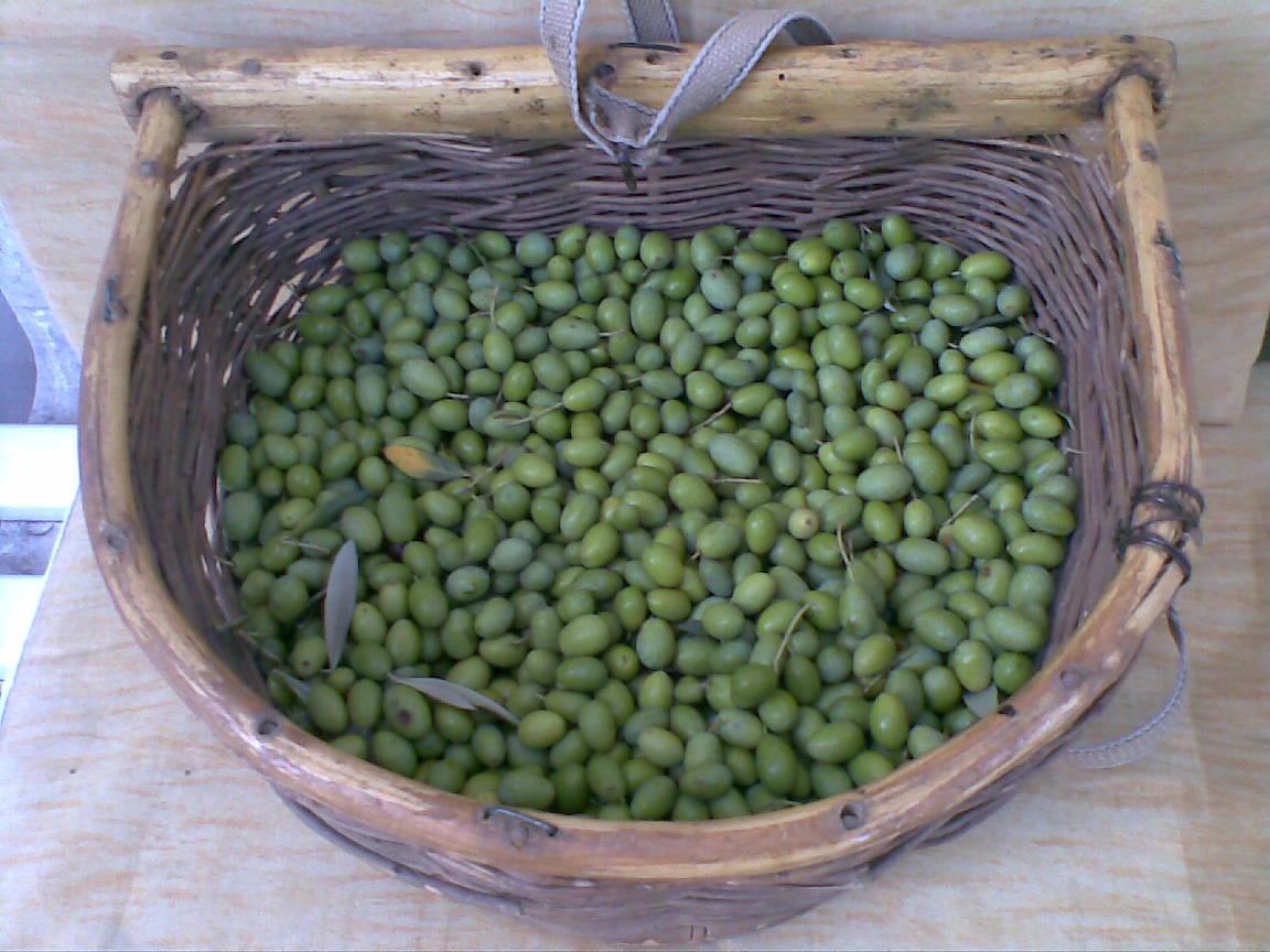cuscino con lenticchie: monstera pianta acquista a poco prezzo ... - Cuscino Con Lenticchie