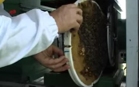 Έρχονται οι στρογγυλές κηρήθρες που θα φέρουν τα πάνω κάτω...στην μελισσοκομία