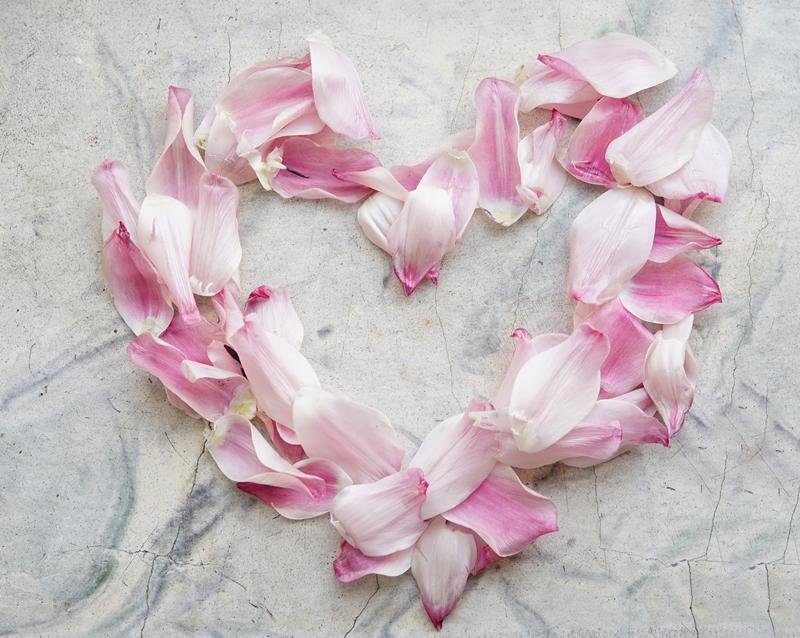 tulppaani, kukka, lakastunut