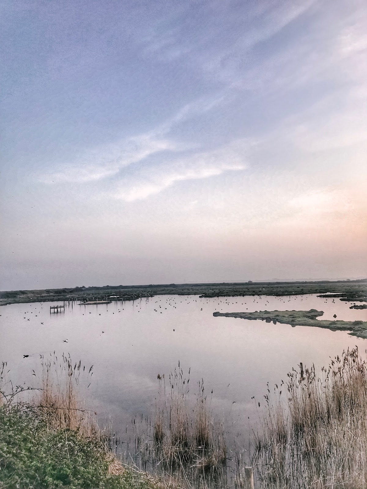 Farlington Marshes | Things To Do In Hampshire