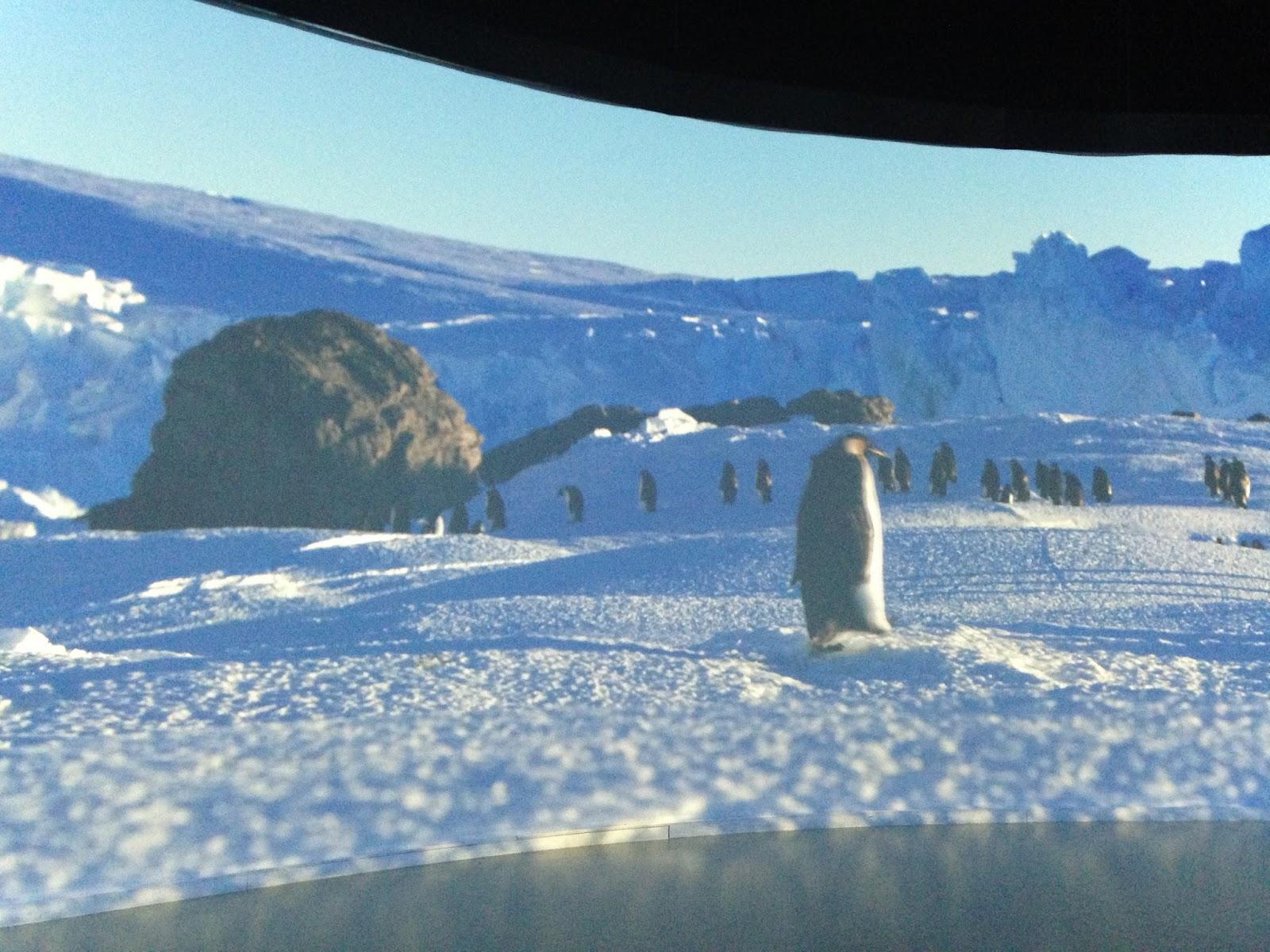 confluence antartica