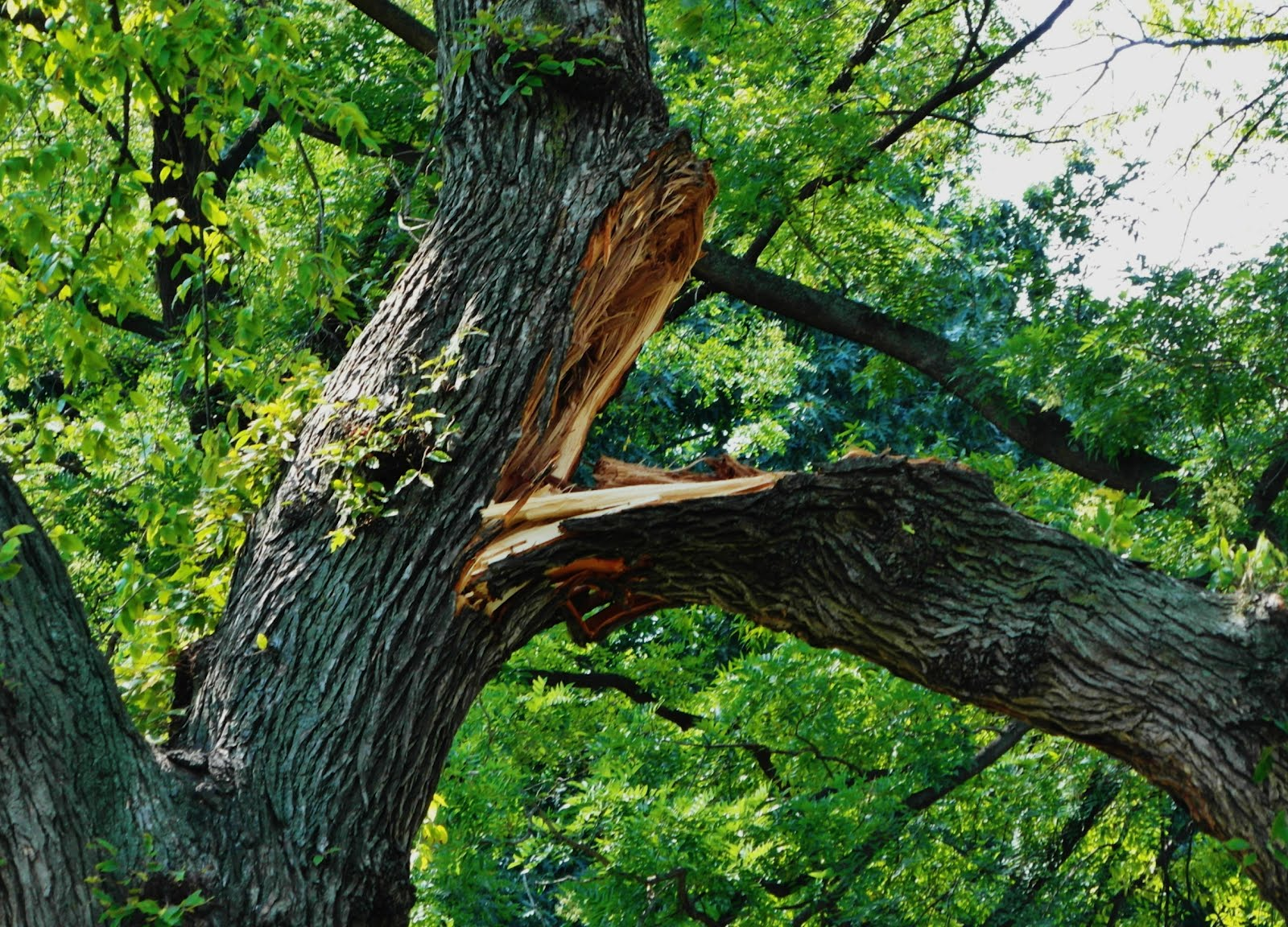EV Grieve: UGH: Another large tree branch falls in ...