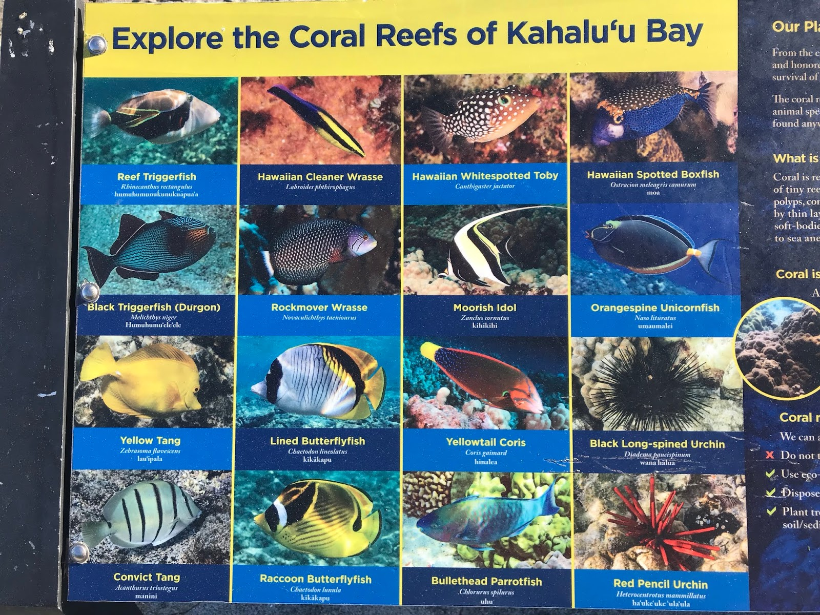 Spicebush Log: Snorkeling the Reefs of Kona, Hawaii