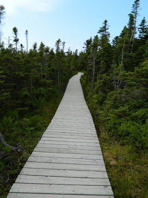 Skyline Trail Cape Breton Highlands National Park Nova Scotia boarded path by garden muses-not another Toronto gardening blog