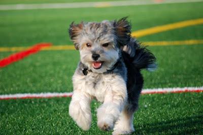 Acondicionamiento físico perros