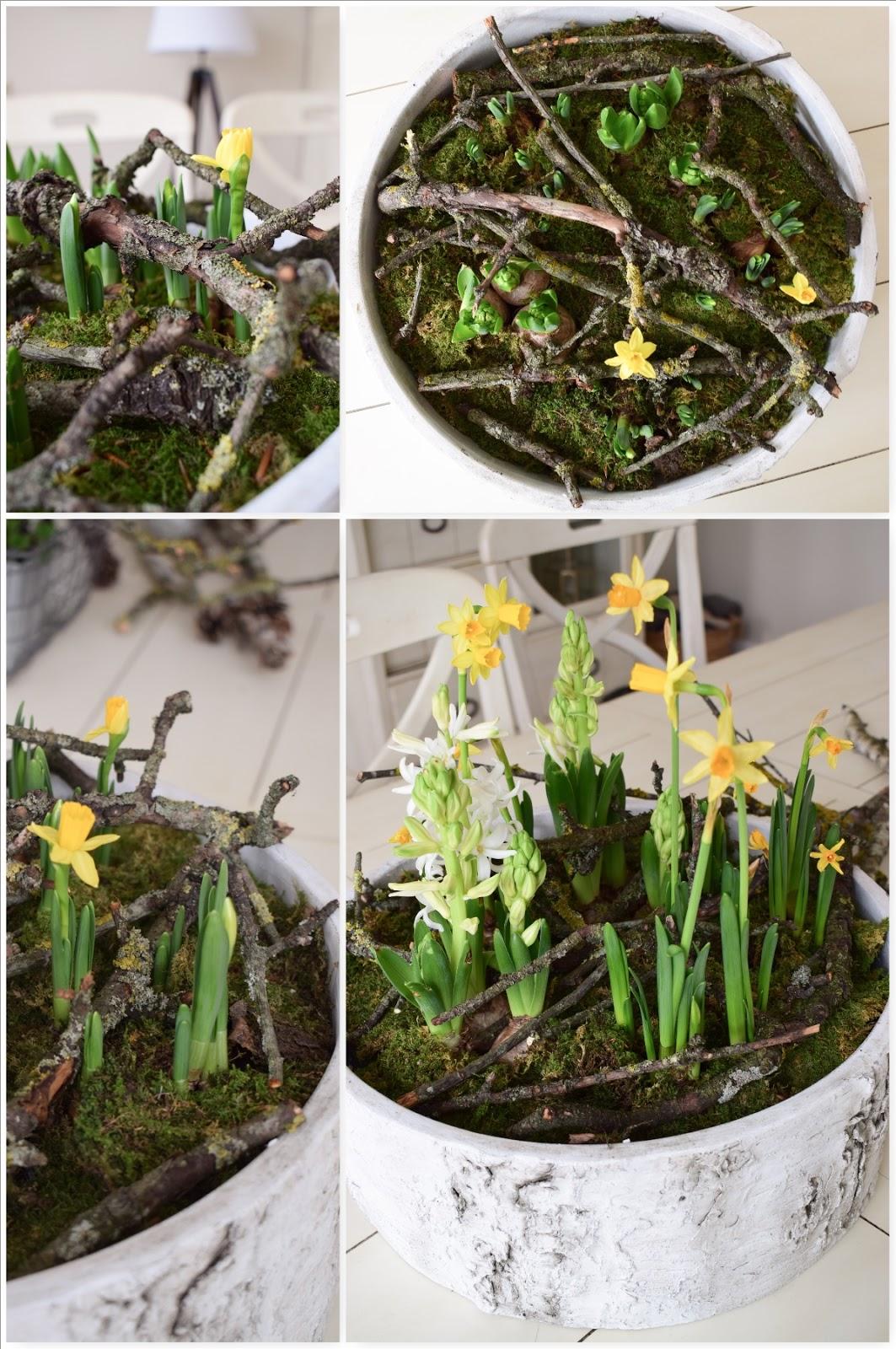 Der Frühling Zieht Ein Frühlingsblüher Und Ganz Viel Natur Für