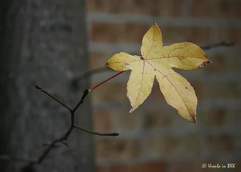 the last leaf brief summary kuliahku the last leaf brief summary