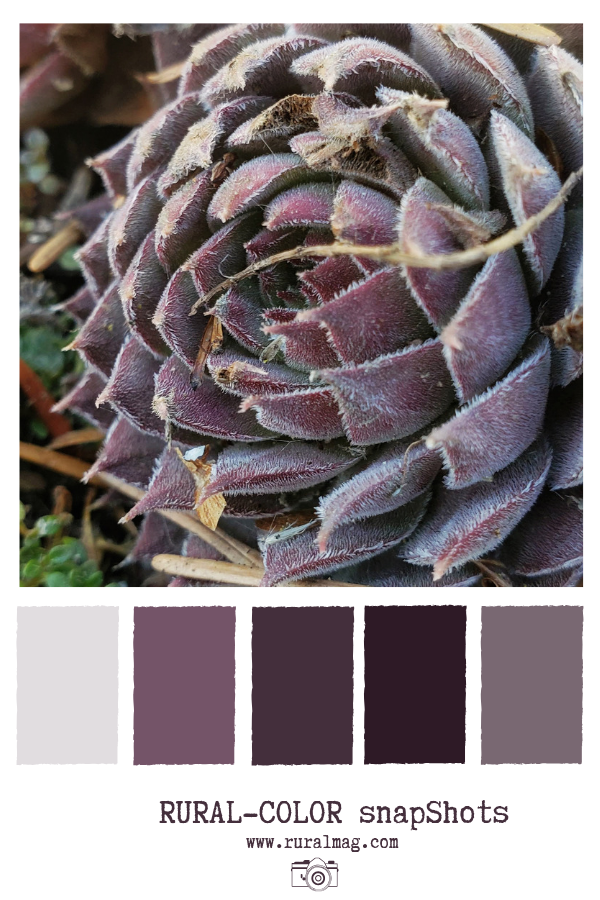succulent with plum toned colour palette from www.ruralmag.com