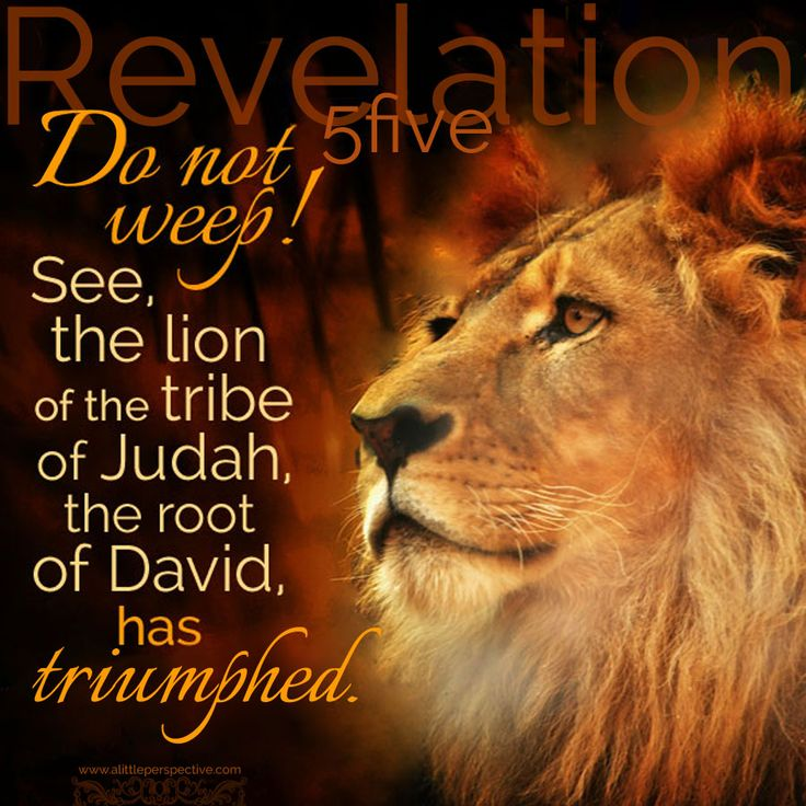 Tammys Notes The Lion Of The Tribe Of Judah
