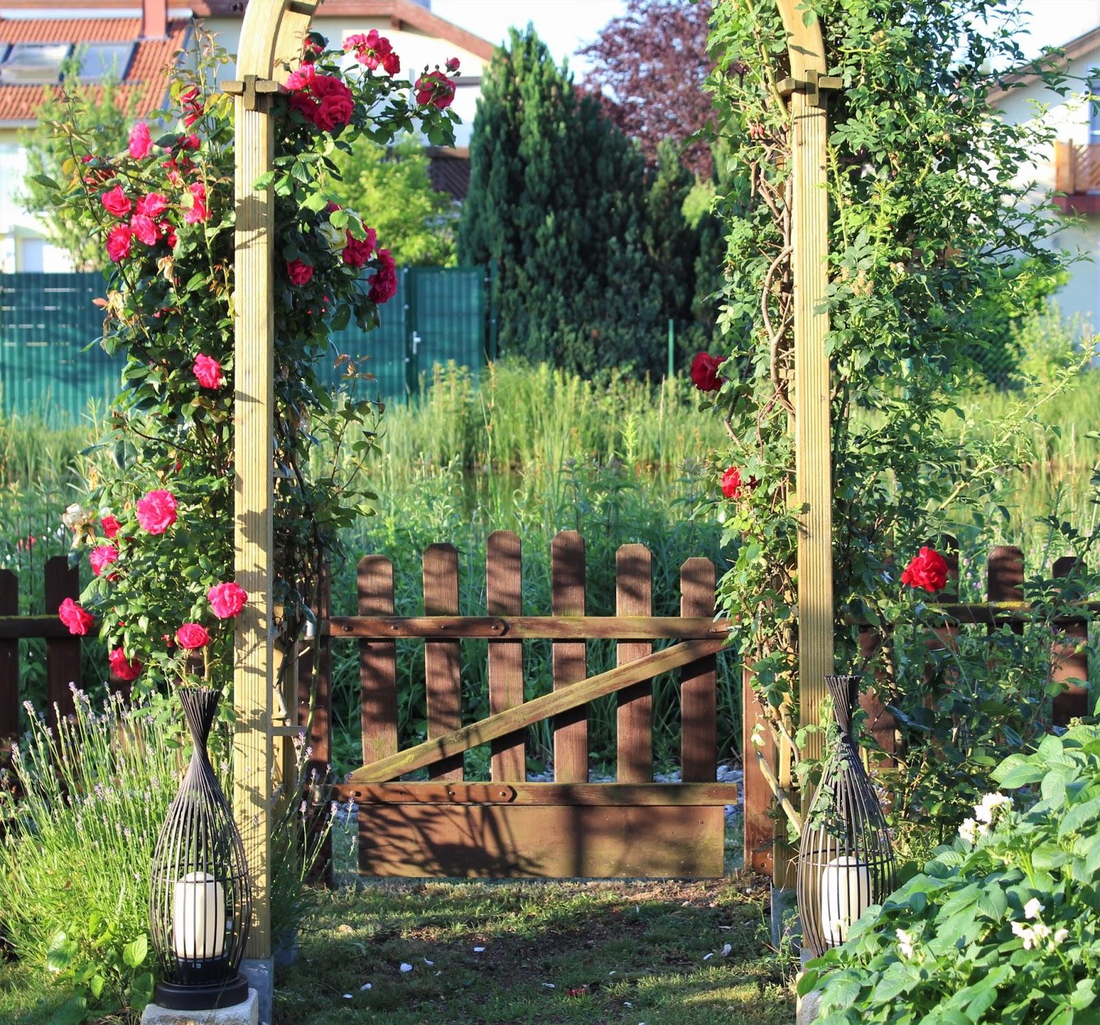 mcmaries kleingartenwelt der juni bringt die bl tenpracht. Black Bedroom Furniture Sets. Home Design Ideas