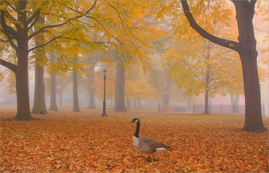18. Foggy Fall Morning by Eddie Yu