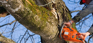 tree felling cutting service in Denpasar Bali