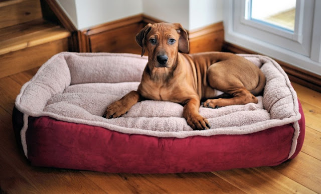 This Dog Does Not Sleep At Night To Watch Over His Master's Door! They Got Their Hearts Broken After They Knew That He Was Doing IT Because Of His Horrifying Past!
