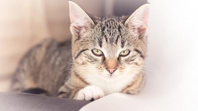 Katze, Kitten, Tier-Portrait von Fotograf Michael Schalansky