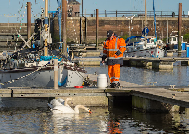 Photo of Mic, one of the marina staff, feeding the swans