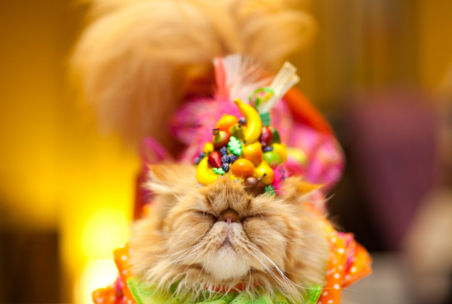 ITS NATIONAL CAT DAY (AND IVE GOTCHA COVERED) - The Militant Baker