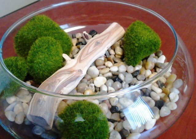 5 tips membuat terrarium mangkok kaca