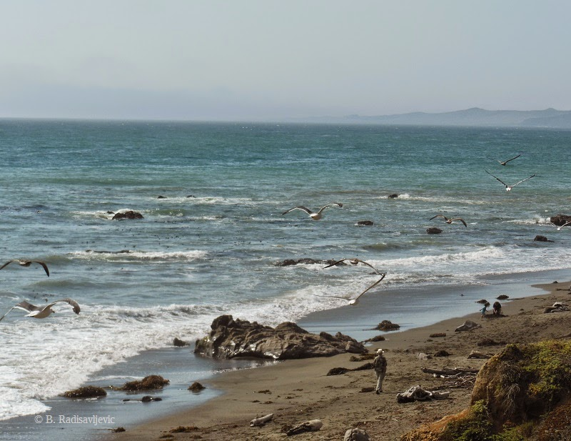 M Is For Moonstone Beach
