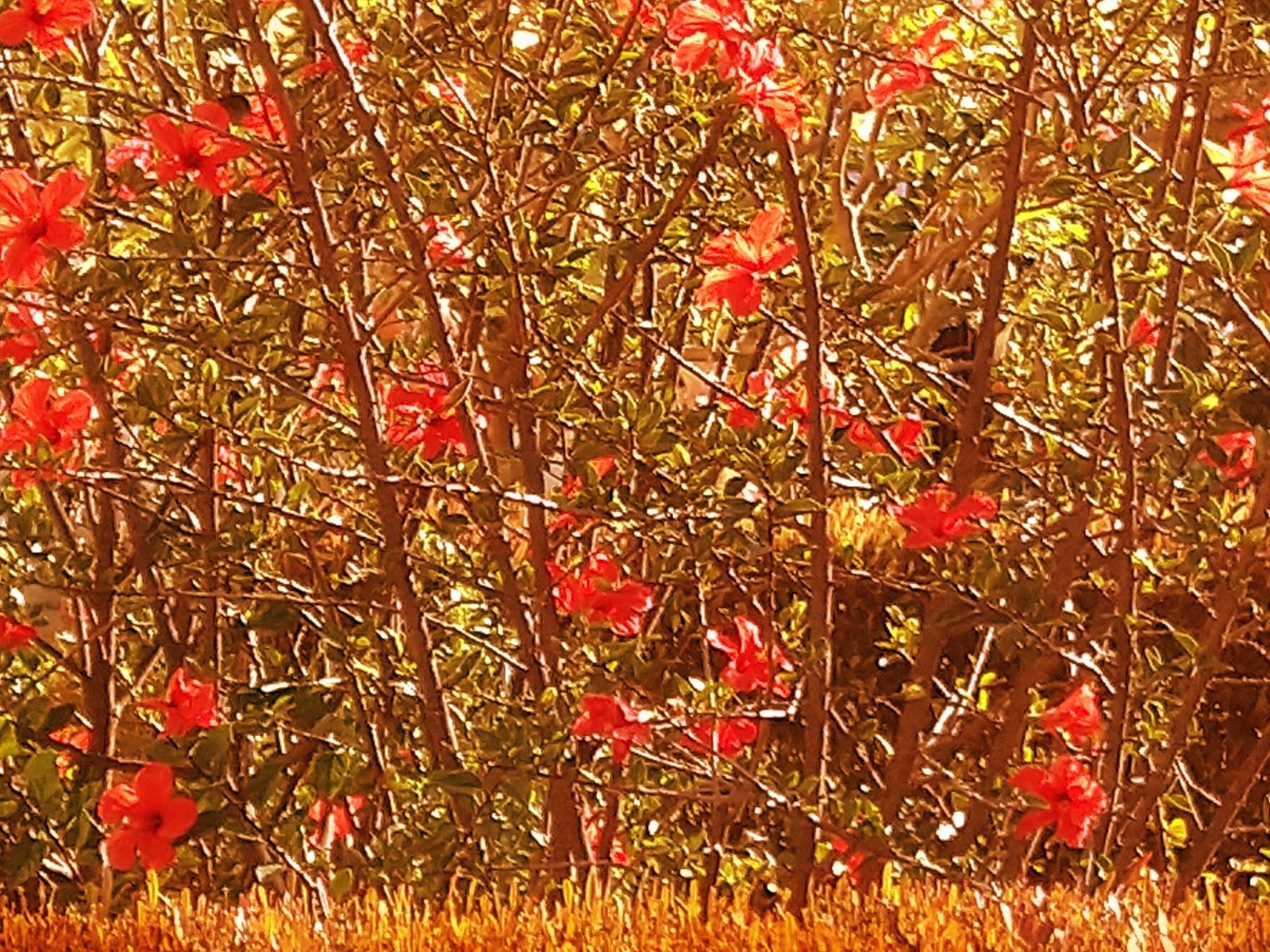 vuelve el otoño