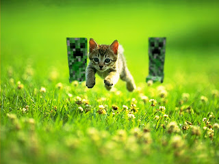 Funny Minecraft Chasing Little Cat HD Wallpaper
