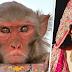 बंदरों की वजह से कुंवारी है यहाँ की सभी लड़कियां, वजह जानकर हो जायेंगे हैरान !